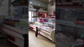 Hungry Cat Wanders Into Meat Shop - 987685-2