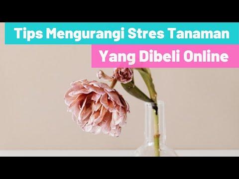 Tips Untuk Mengurangi Tingkat Stres Pada Tanaman