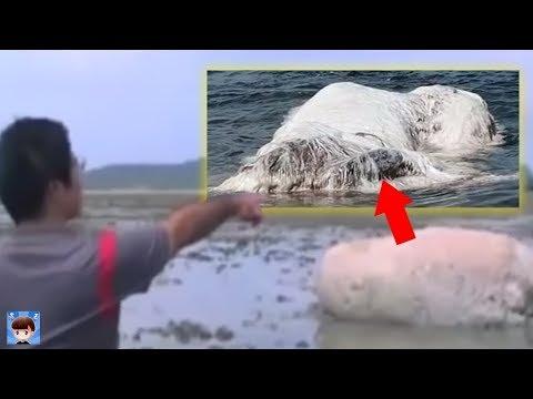 10個在日本海嘯後【被發現的奇怪海洋生物】