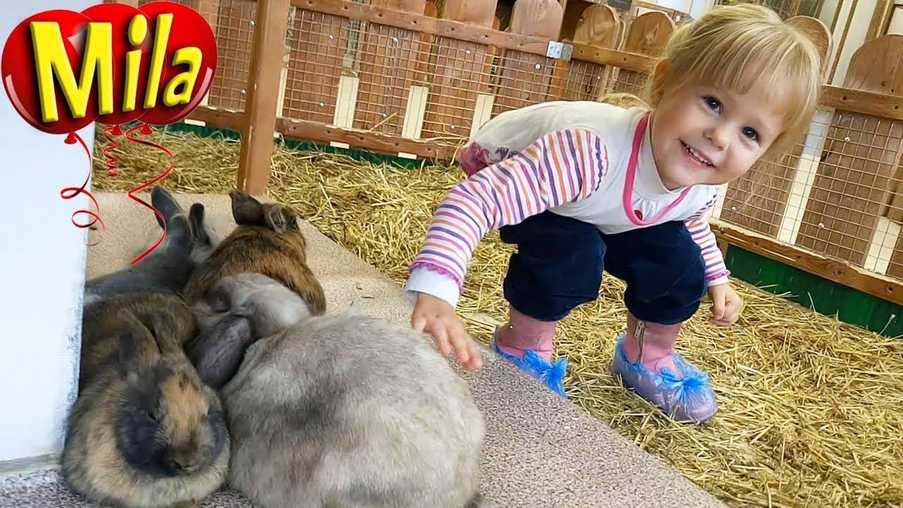 Животные Зоопарк Учит Животных | домашние животные для дошкольников видео