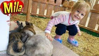 Детский Контактный Зоопарк  🐾 Домашние Животные для Детей 🐰🐷🐭🐥 Учим Животных