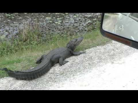 Lacassine Wildlife Refuge Nature Drive 2019, SW Louisiana