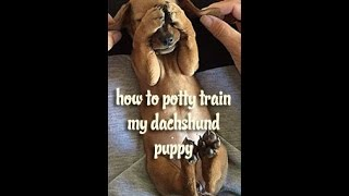 how to potty train my dachshund puppy