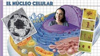 El núcleo célular - 2º de Bachiller. Bio[ESO]sfera