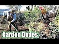Garden Duties, Backyard Chicken Vision & Quick Tree Stump Bench