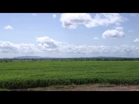 Green Crop Farming Ghana - Chia field from 27 March 2014