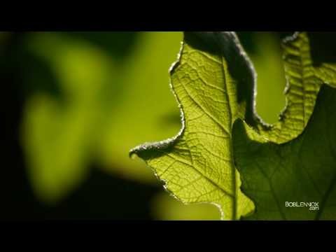 How To Created Amazing Macro/Abstract Nature Images With A Telephoto Lens.