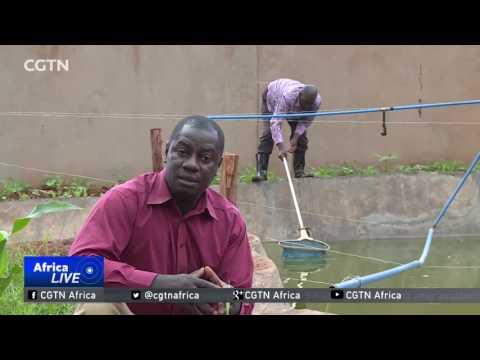 Fish farming on the rise in Uganda