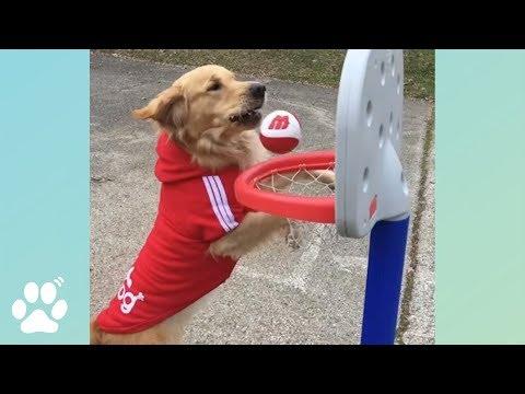 Air Bud Returns! 🐶🐶🐶 | Doggo Friday