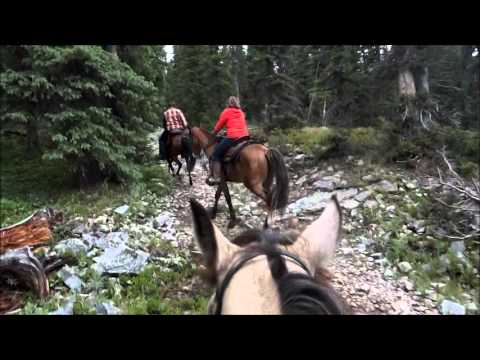 Crested Butte, Colorado Trail Riding on Tennessee Walking Horses