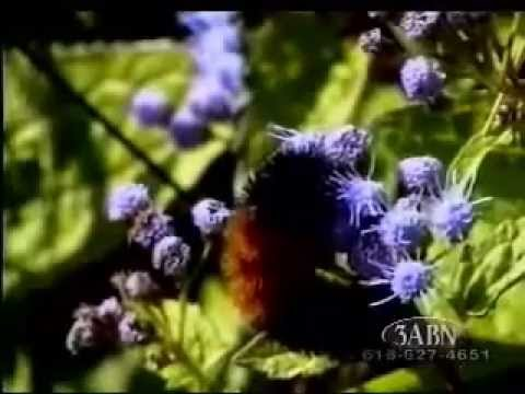 Back To Nature - 3ABN Music