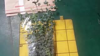 [인터넷꽃도매시장]유칼립투스 블랙잭 꽃다발만들기 꽃바구…