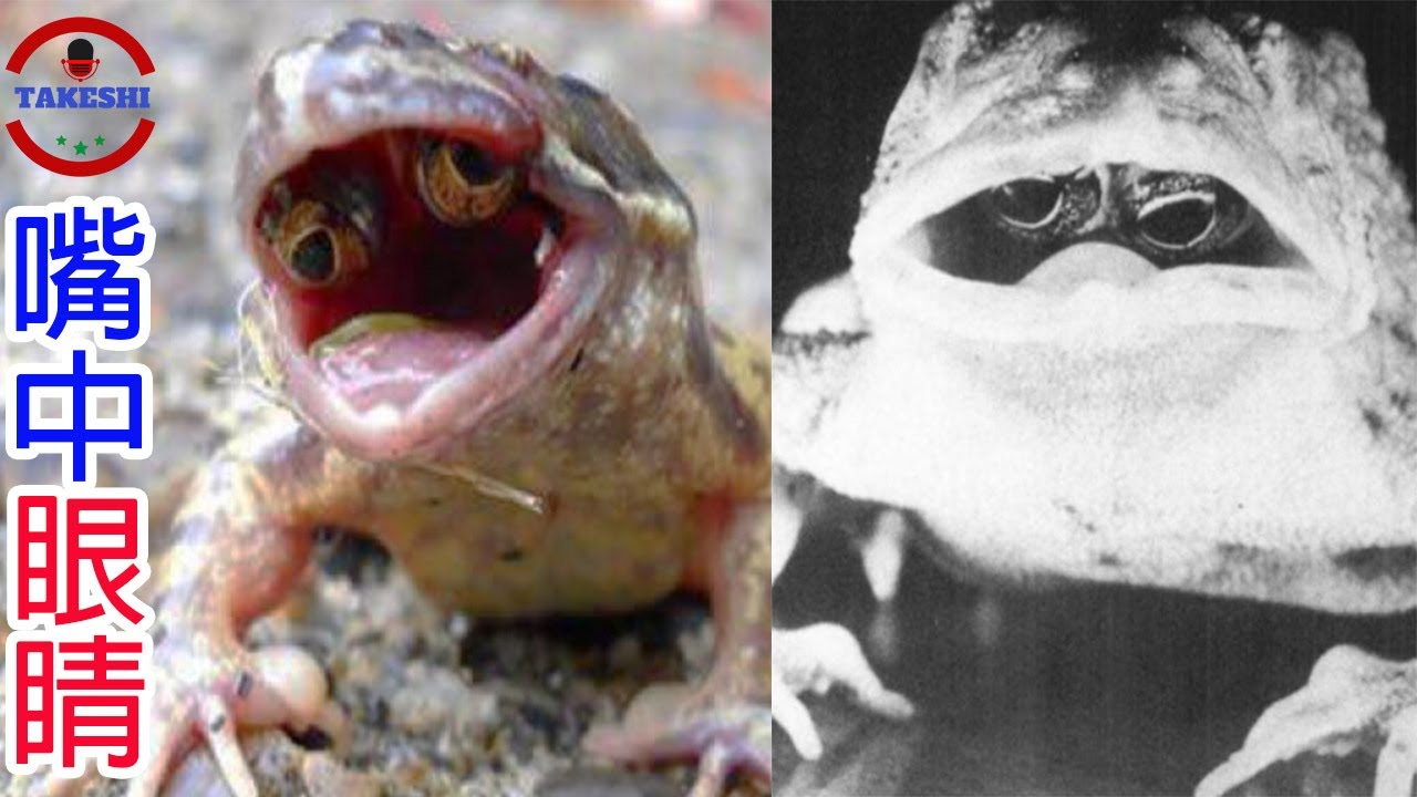 [TOP2]數個降臨在蟾蜍上的謎之災難   用嘴巴裡眼睛看世界的蟾蜍   啃食整顆頭的恐怖生物