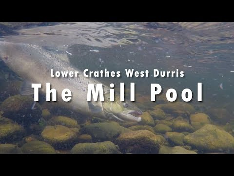River Dee Salmon - Lower Crathes West Durris On The Mill Pool