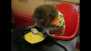 Обезьянка Иван ест любимый сырный супчик.