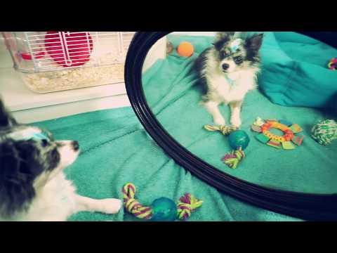 Вопрос: Почему собаки и кошки не смотрятся в зеркало?