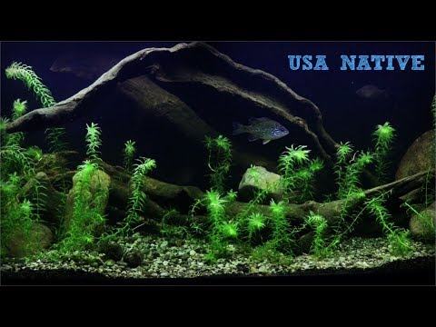 Creating My North American Native Fish Tank