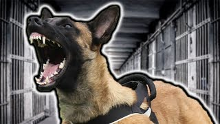 TOP 10 PERSONAL PROTECTION DOGS