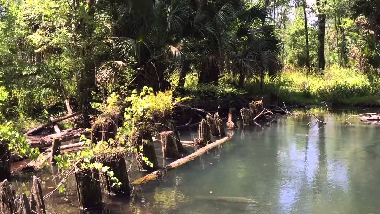 Moccasin Spring at Seminole State Forest - YouTube
