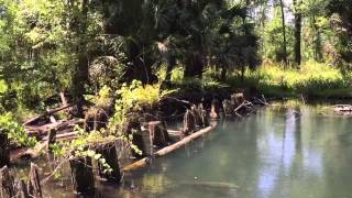 Moccasin Spring At Seminole State Forest