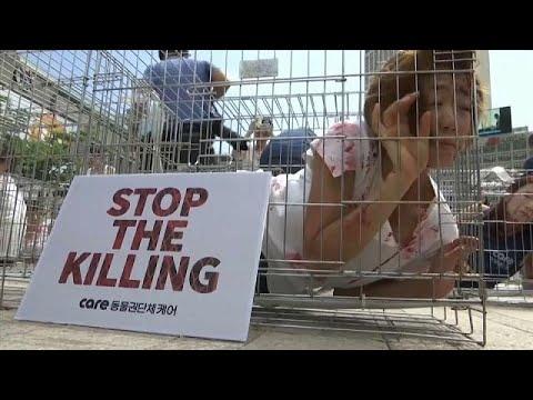 شاهد: بشر في اقفاص احتجاجا على أكل لحوم الكلاب  - 11:21-2017 / 8 / 11