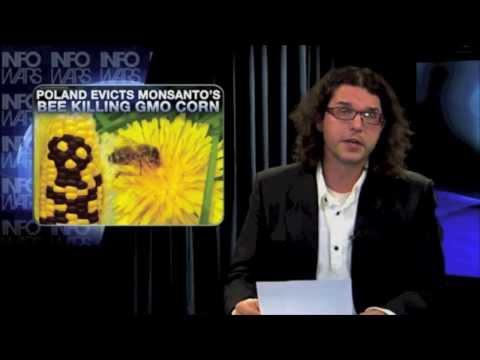Poland Evicts Monsanto's Bee Killing GMO Corn