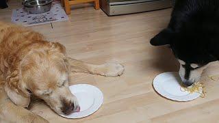 Dogs Race to Finish Dinner || ViralHog