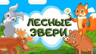 Загадки про животных леса для детей. Лесные животные. Учим зверей