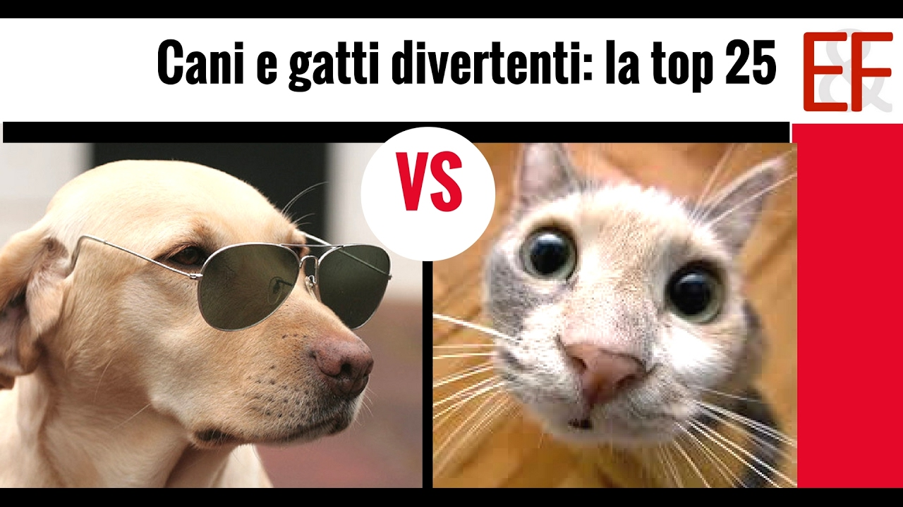 Super Cani e gatti divertenti: la classifica dei 25 finalisti - YouTube YM14