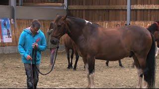 Apprendre à parler cheval avec Jean-François Pignon