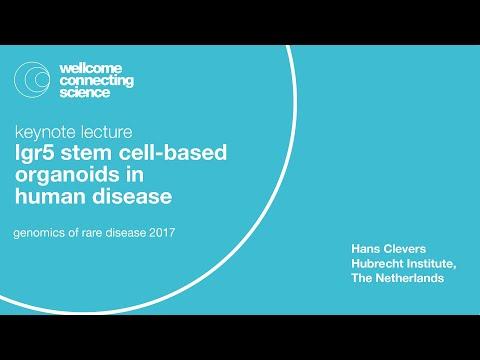 Lgr5 Stem Cell-based Organoids In Human Disease - Hans Clevers