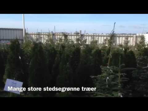 Audebo Havecenter, planter,