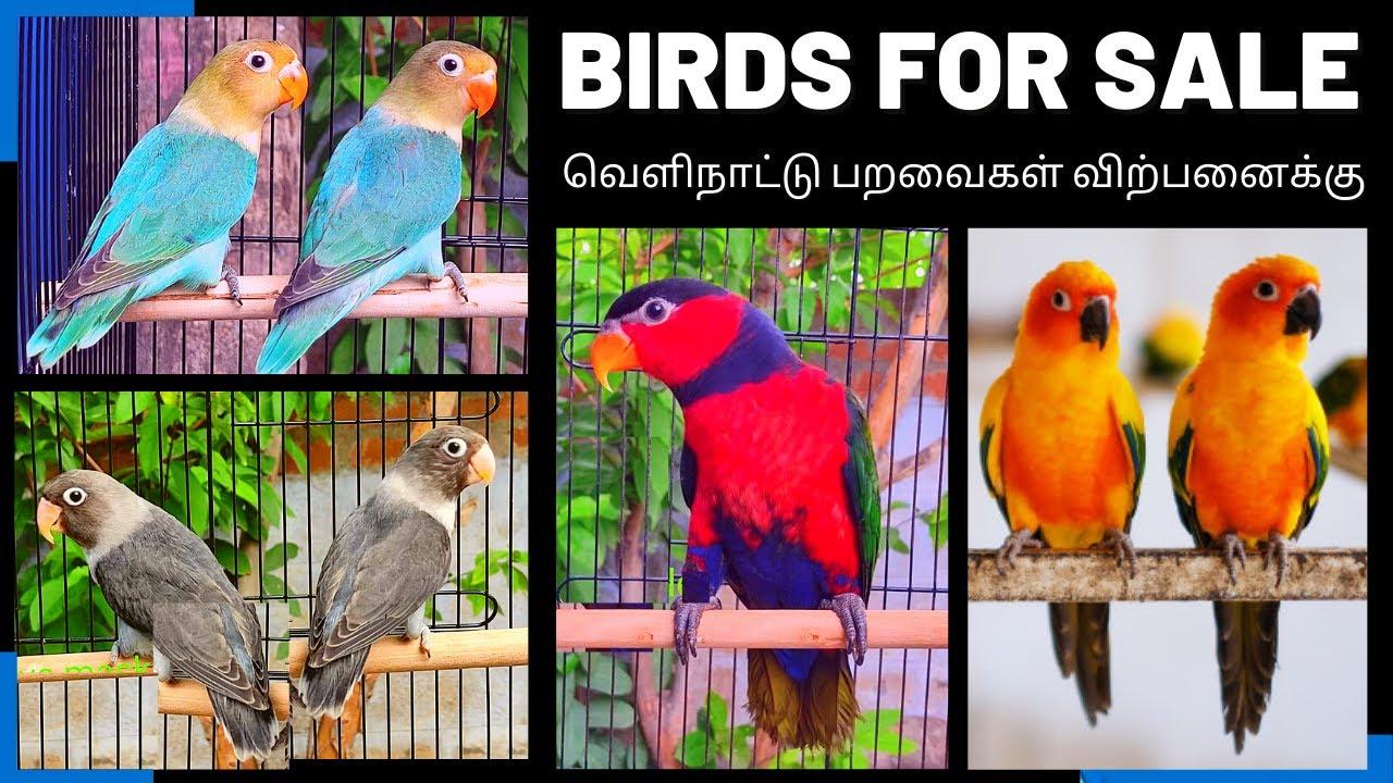 PETS FOR SALE | HAND TAMED  BIRDS @ CHEAP RATE  | கம்மி விலையில்  வெளிநாட்டு  பறவைகள்