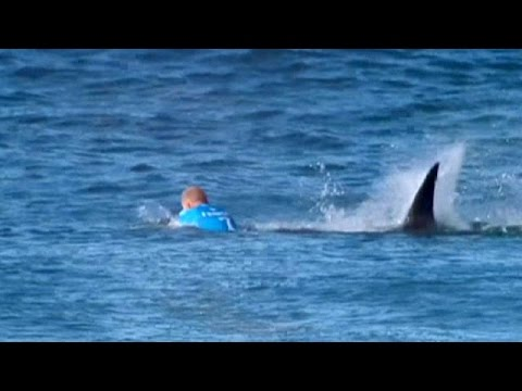 Surfeur requin video