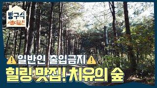 청계산 피톤치드 맛집! 서울대공원 치유의 숲의 가을ㅣ방…