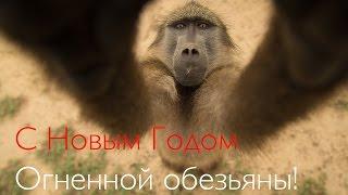 С Новым Годом Огненной Обезьяны !(Дорогие наши друзья! Это видео счастья с обезьянками в честь года Огненной обезьяны! Посмотрите это видео..., 2015-12-31T16:58:44.000Z)
