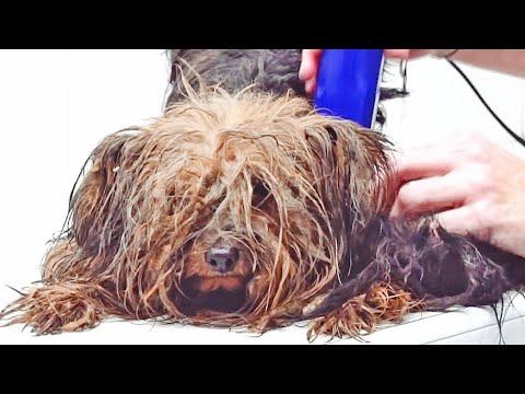 Un tributo a Cesar... el perrito que pasó la vida dentro de una caja