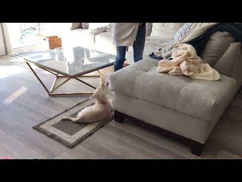 Dog Training by Kiki Yablon — Chicago, Illinois