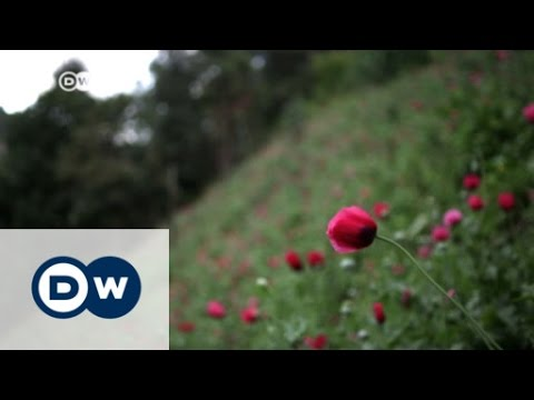 Mexican cartels shift to heroin for US market | DW News