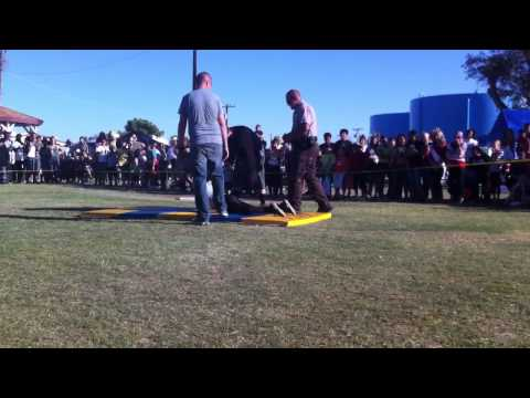 La Paz County Sheriff Taser Demonstration
