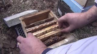 Итог эксперимента по зимовки пчел в помещении с температурой 22 градуса