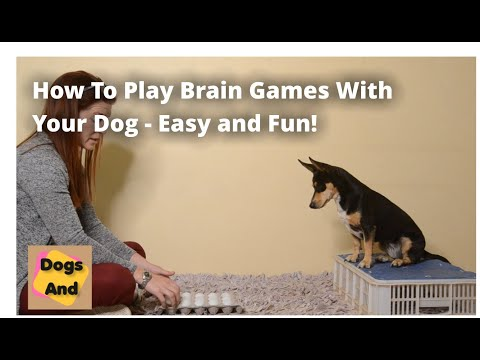 What Are Brain Games For Dogs And How Do They Work?