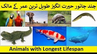 animals with longest lifespan | Ajeeb O Ghareeb | 2018 | Animals