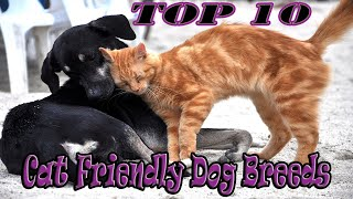 TOP 10 Cat Friendly Dog Breeds in the world 2020 to own as Pets for Families
