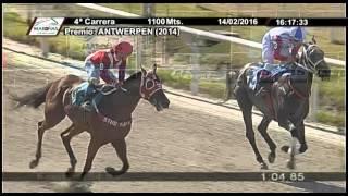 Vidéo de la course PMU PREMIO ANTWERPEN