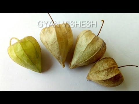 अगर कहीं मिल जाए यह फल तो अपने पास रख लो Ll बड़े नसीब वालों को ही मिलता है ये