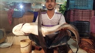 Wonderful Market  | Big Fish Market Banani Dhaka Bangladesh
