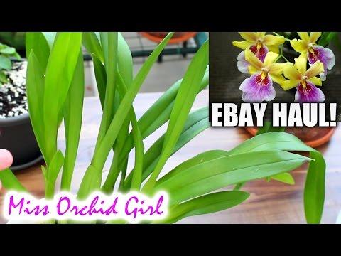Mini Ebay Orchid haul