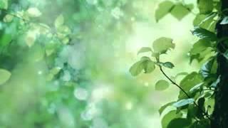 Best Quran Recitation :  Surah  As Sajdah - By Yousuf Kalo