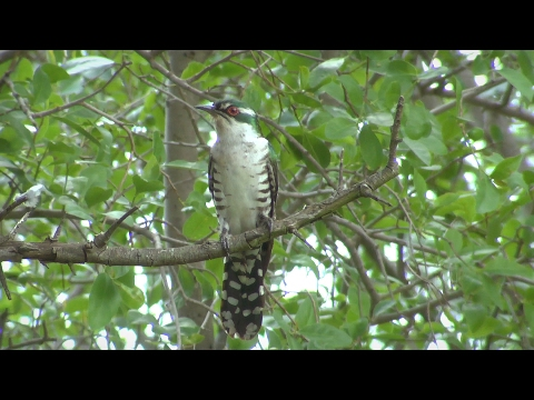 Birds of northern South Africa part 1